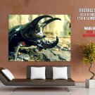 Rhinoceros Beetle Insect Macro Huge Giant Print Poster