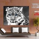 Snow Leopard Wild Cat Animal Huge Giant Print Poster