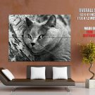 Fat Lazy Cat Bw Animal Huge Giant Print Poster