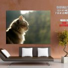 Graceful Kitty Cat Nature Animal Huge Giant Print Poster