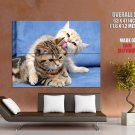 Kitty Licking Friend Cat Tongue Animal Huge Giant Print Poster