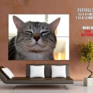Happy Glad Smiling Cat Animal Huge Giant Print Poster