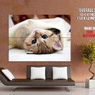 Nice Kitty Cat Blue Eyes Animal Huge Giant Print Poster