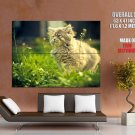 Fuzzy Cat Eating Grass Animal Huge Giant Print Poster