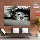 Sleepy Cat Covering Bw Animal Huge Giant Print Poster
