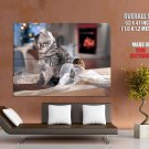 Cute Kitty Playing Ribbon Cat Animal Huge Giant Print Poster