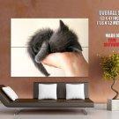 Gift Cute Kitten Sleeping Cat Animal Huge Giant Print Poster