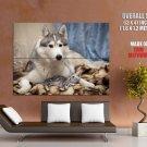 Friendship Dog Cat Kitten Animal Huge Giant Print Poster