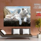 White Mountain Lion Majestic Animal Huge Giant Print Poster