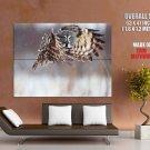 Hunting Hovering Owl Animal HUGE GIANT Print Poster