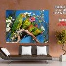 Parrots Birds Wild Nature Animal HUGE GIANT Print Poster