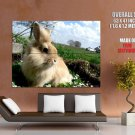Cute Rabbit Bunny Nature Animal HUGE GIANT Print Poster