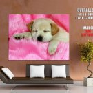 Cute Sleeping Puppy Small Dog Animal HUGE GIANT Print Poster