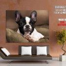 French Bulldog Dog Animal Huge Giant Print Poster
