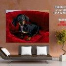 German Badger Dog Animal Huge Giant Print Poster