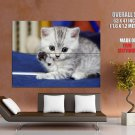 Cute Kitten Beautiful Cat Kitty HUGE GIANT Print Poster