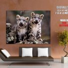 Snow Leopard Cute Cubs Huge Giant Print Poster