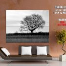 Lonely Winter Tree Nature Huge Giant Print Poster