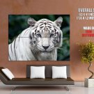 White Tiger Animal Nature Huge Giant Print Poster