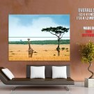 Savanna Giraffe Africa National Geographic HUGE GIANT Print Poster