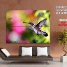 Hummingbird Bee Macro Animal Nature HUGE GIANT Print Poster