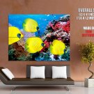 Yellow Fish Ocean Underwater Nature HUGE GIANT Print Poster