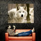White Wolves Wild Nature Animals Huge 47x35 Print POSTER