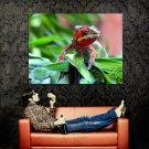 Chameleon Macro Colors Nature Animals Huge 47x35 Print POSTER