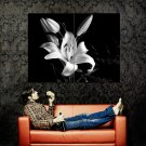 Lilium Lily Flower Beautiful Macro BW Huge 47x35 Print POSTER