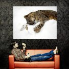 Snow Leopard Wild Cat Playing Huge 47x35 Print POSTER