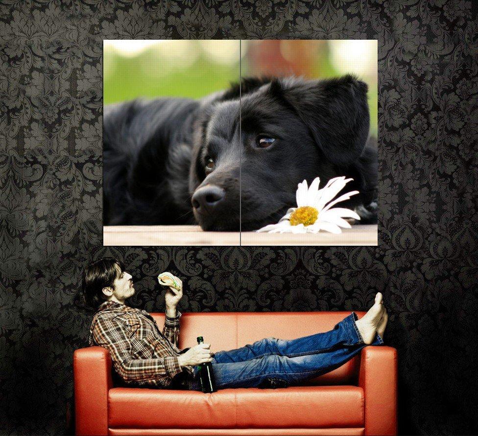 Faithful Dog Camomile Huge 47x35 Print POSTER