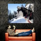 Eskimo Dog Snow Forest Huge 47x35 Print POSTER