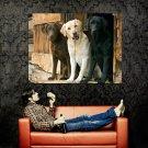 Three Labrador Retriever Dogs Huge 47x35 Print POSTER