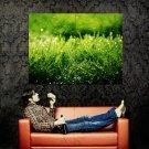 Grass Dew Wind Focus Nature Huge 47x35 Print POSTER