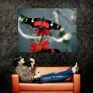 Black Butterfly Insect Macro Huge 47x35 Print POSTER