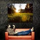Lawn Grass Sunset Glare Macro Huge 47x35 Print POSTER