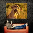 Mother Lion Carring Baby Wild Cat Animal Huge 47x35 Print POSTER