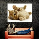 The Cutest Kitten Cat Kitty Animal Huge 47x35 Print POSTER