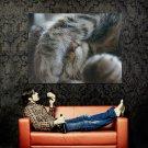 Sleeping Cat Paw Funny Animal Huge 47x35 Print Poster