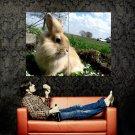 Cute Rabbit Bunny Nature Animal Huge 47x35 Print Poster