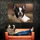French Bulldog Dog Animal Huge 47x35 Print Poster
