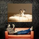 Cute Dog Dalmatian Animal Huge 47x35 Print Poster
