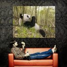 Panda Bear Eating Wild Nature Animal Huge 47x35 Print Poster