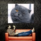 Cool Funny Winking Cat Huge 47x35 Print Poster