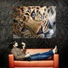 Cute Tiger Wild Cat Animal Huge 47x35 Print Poster