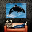 Killer Whale Jump Sea Huge 47x35 Print Poster