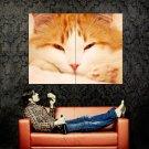 Ginger Cat Animal Huge 47x35 Print Poster