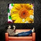 Fractal Flowers Amazing Art Huge 47x35 Print Poster