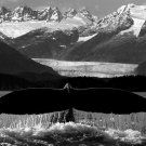 Whale Tail BW Mountains Nature Animals 32x24 Print POSTER
