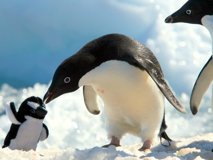 Penguins Toy Snow Antarctica Nature Animals 32x24 Print POSTER